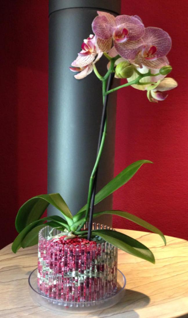 Die Bilder Zeigen Wie Orchideen Im Colomi Orchideensubstrat In Einem  Orchitop Eingepflanzt Werden.