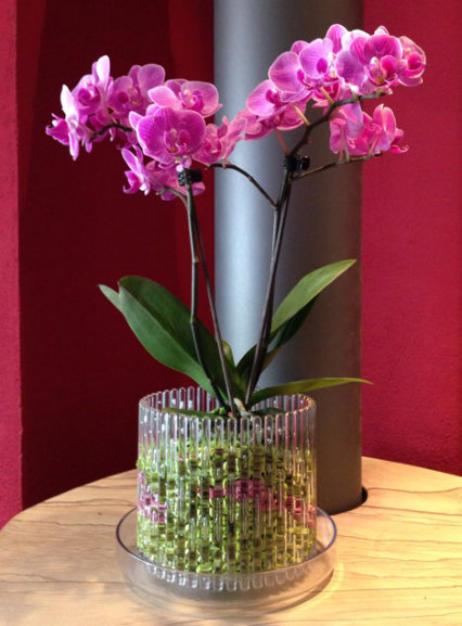 Wunderbar Die Bilder Zeigen Wie Orchideen Im Colomi Orchideensubstrat In Einem  Orchitop Eingepflanzt Werden.